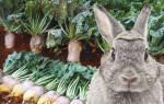 Можно ли давать кроликам ботву свеклы
