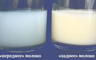 Заднее и переднее грудное молоко