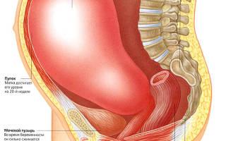 Твердеет матка при беременности