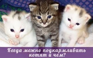 С какого возраста кормить котят и чем