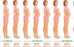 Недели беременности по месяцам таблица