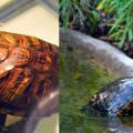 Можно ли банан сухопутным черепахам