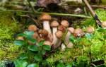 Можно ли есть беременным грибы