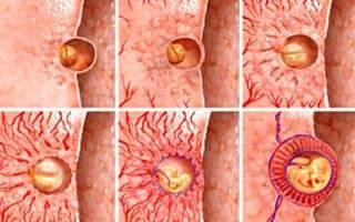 Старение плаценты при беременности причины